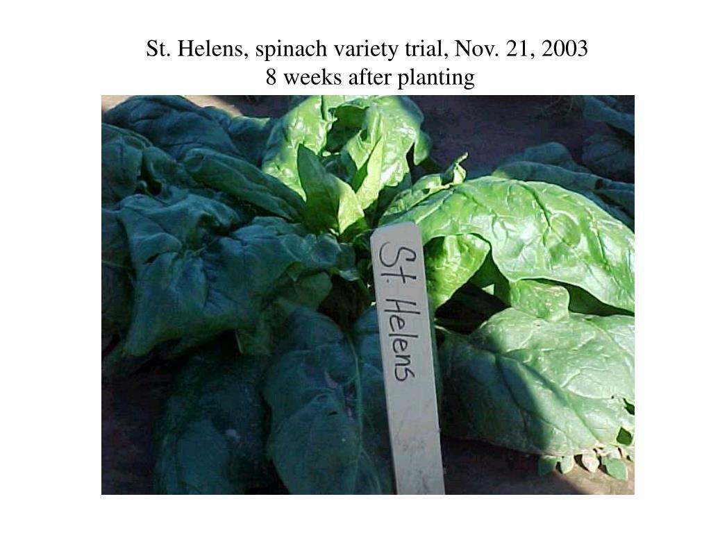 St. Helens, spinach variety trial, Nov. 21, 2003