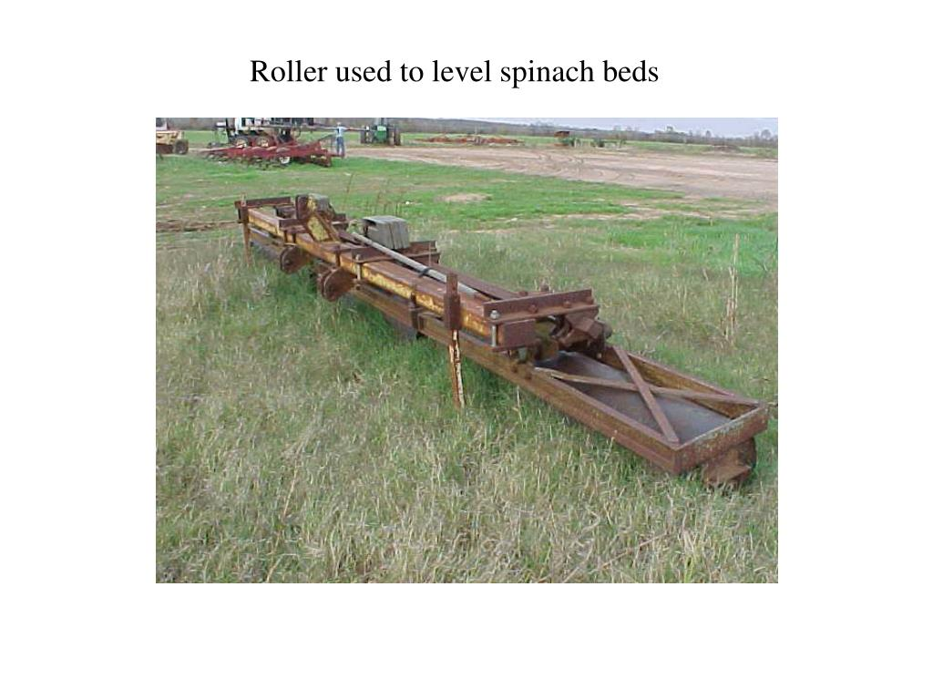 Roller used to level spinach beds