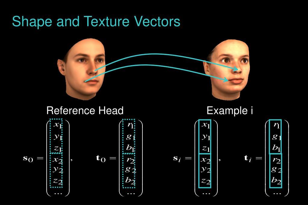 Shape and Texture Vectors