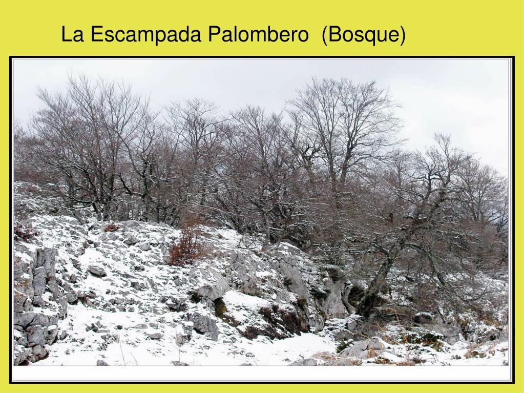 La Escampada Palombero  (Bosque)