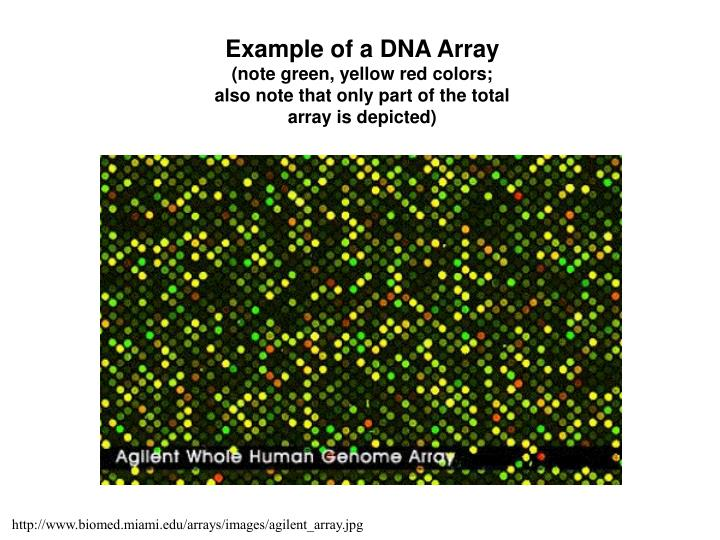 Example of a DNA Array