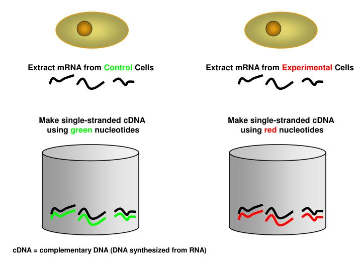 Extract mRNA from
