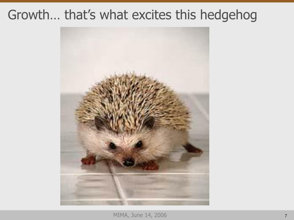 Growth… that's what excites this hedgehog