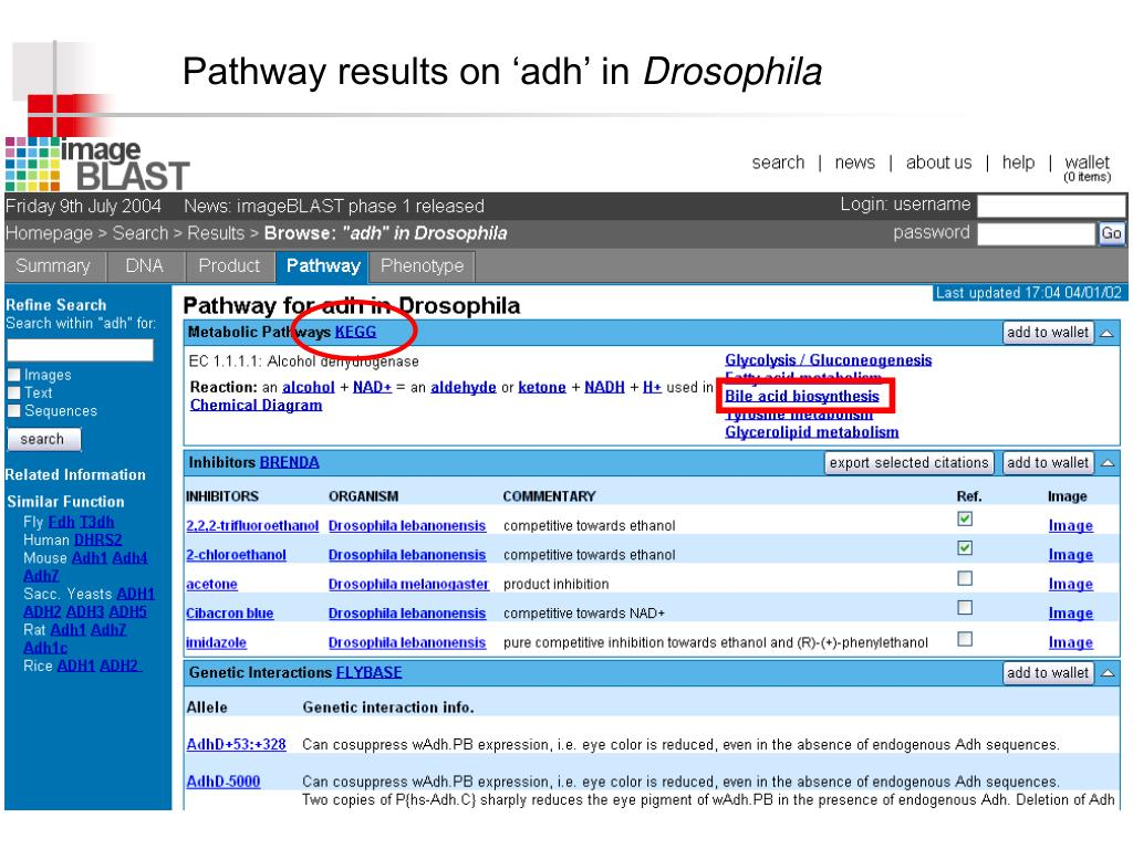 Pathway results on 'adh' in