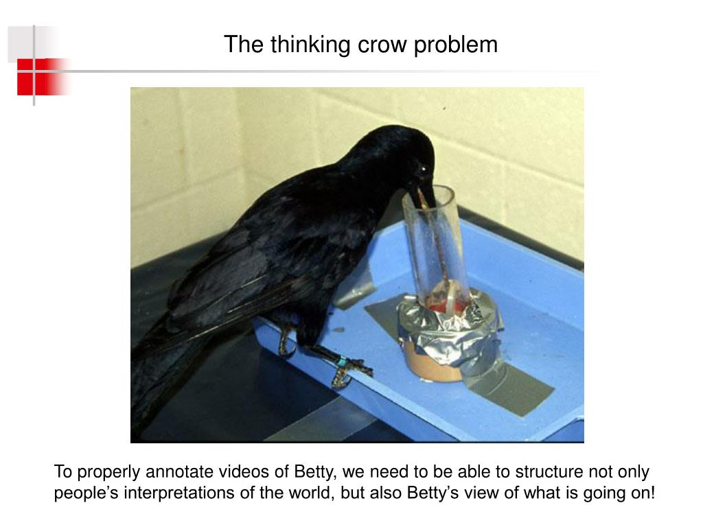 The thinking crow problem