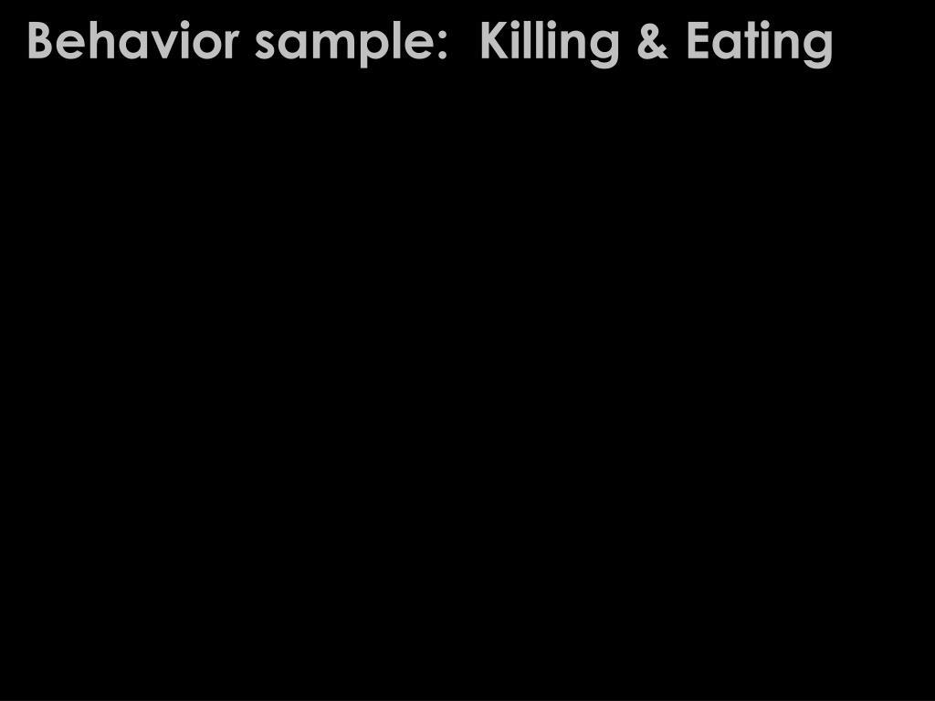 Behavior sample:  Killing & Eating