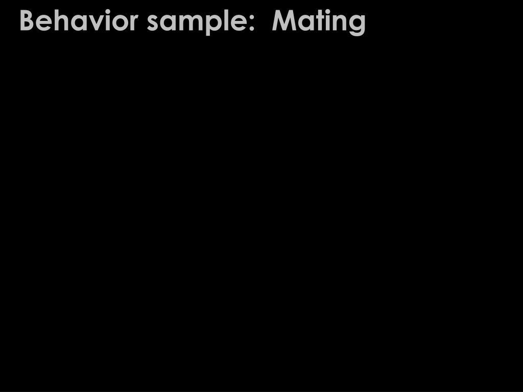 Behavior sample:  Mating