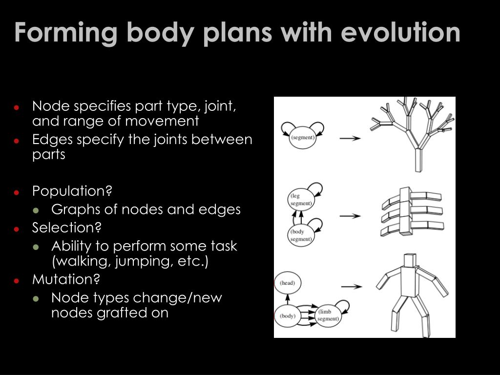 Forming body plans with evolution