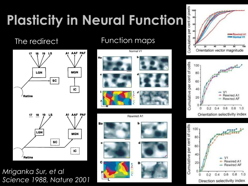 Plasticity in Neural Function