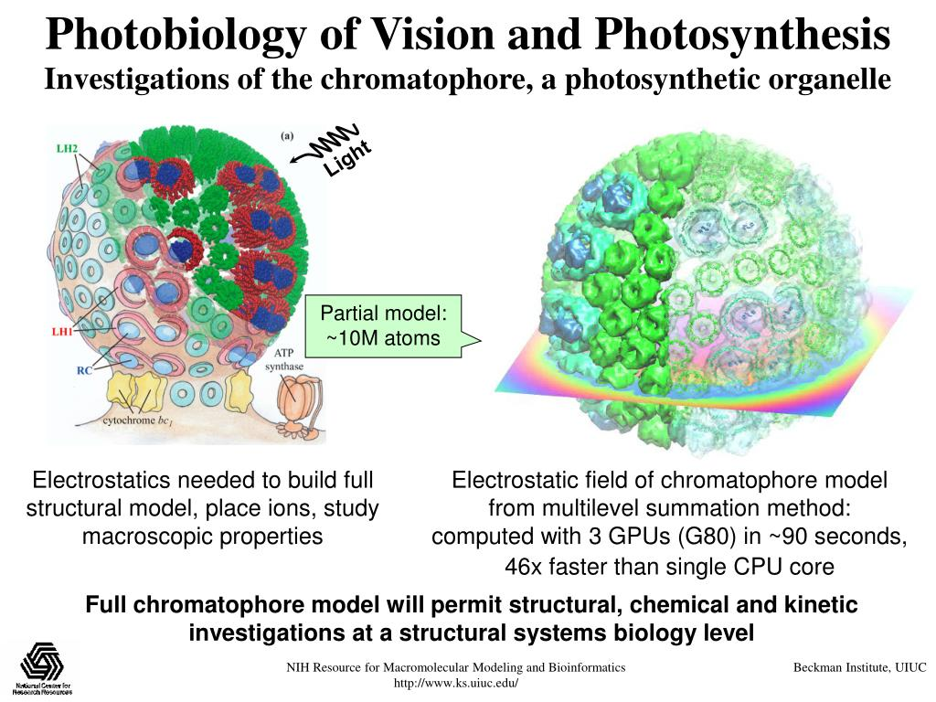Photobiology of Vision and Photosynthesis