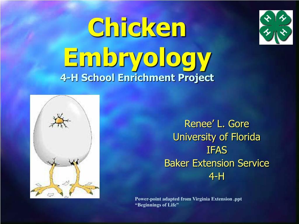 Chicken Embryology