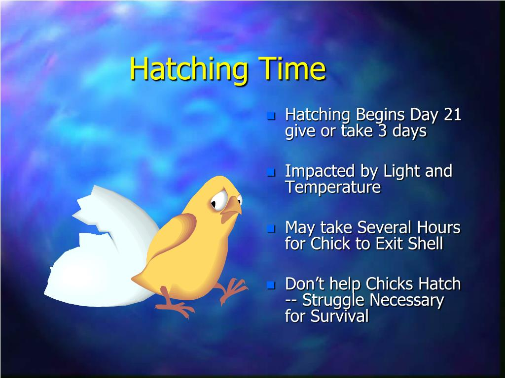 Hatching Time