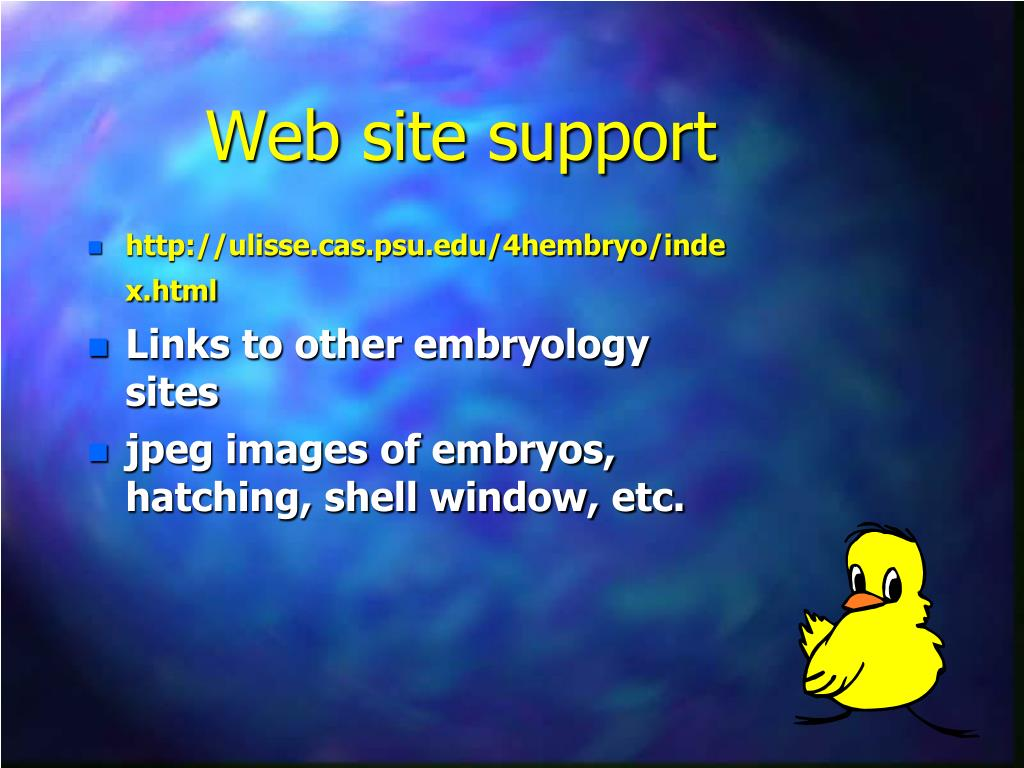 Web site support