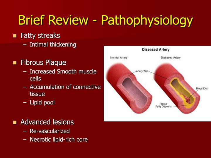 Brief Review - Pathophysiology