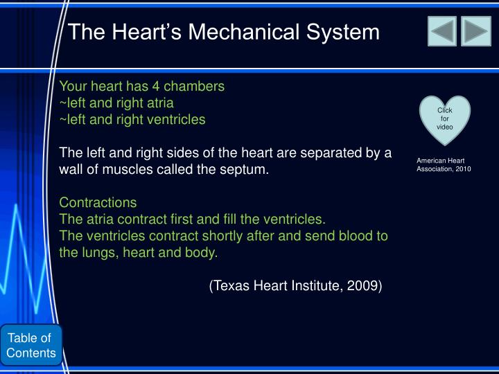 The Heart's Mechanical System