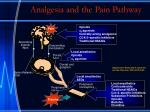 analgesia and the pain pathway