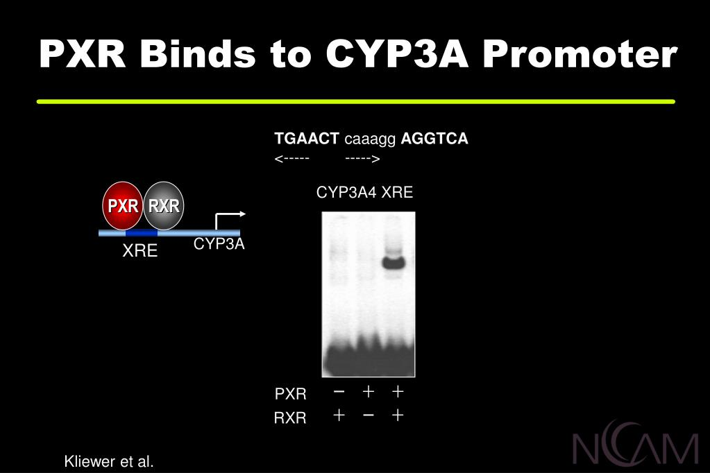 PXR Binds to CYP3A Promoter
