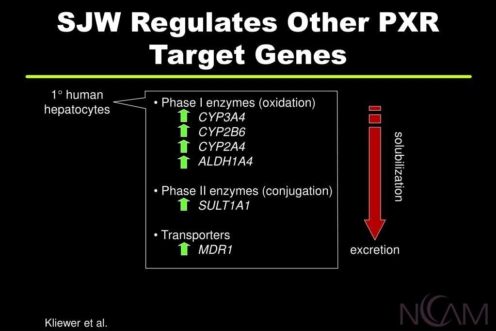 SJW Regulates Other PXR Target Genes