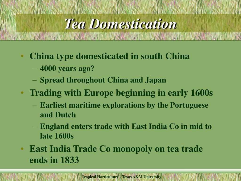 Tea Domestication