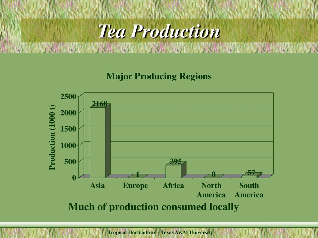 Tea Production