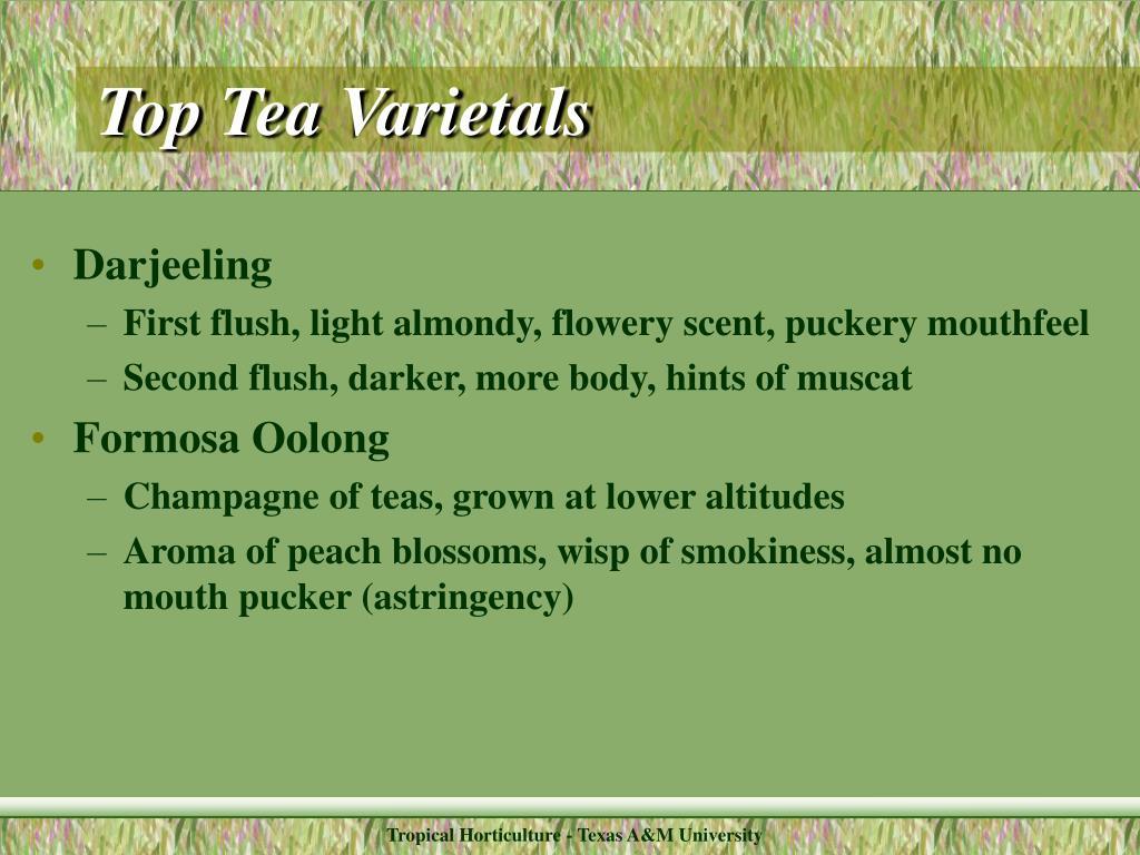 Top Tea Varietals