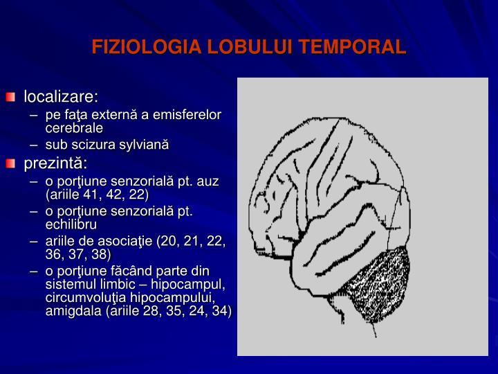 FIZIOLOGIA LOBULUI TEMPORAL