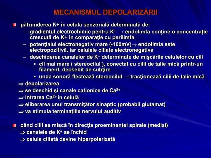 MECANISMUL DEPOLARIZĂRII