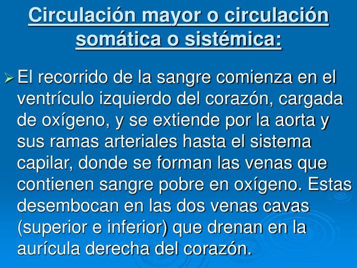 Circulación mayor o circulación somática o sistémica: