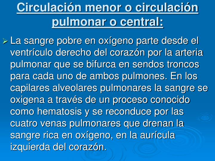 Circulación menor o circulación pulmonar o central: