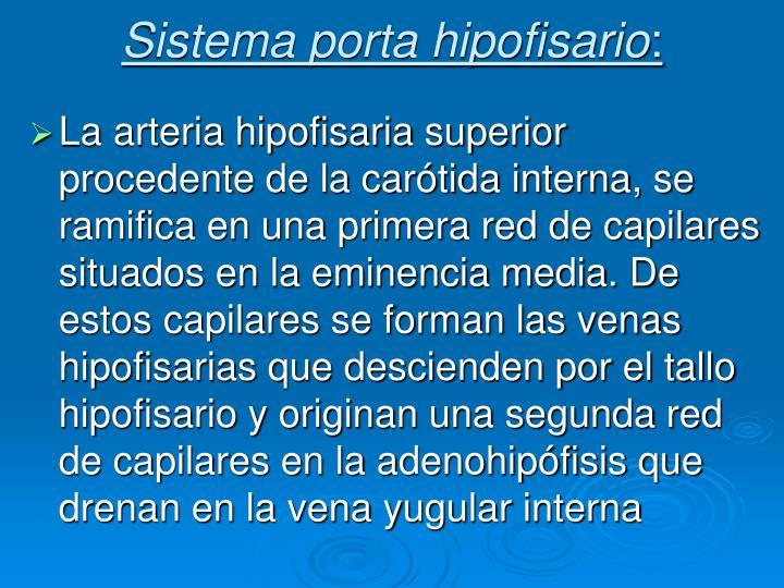 Sistema porta hipofisario