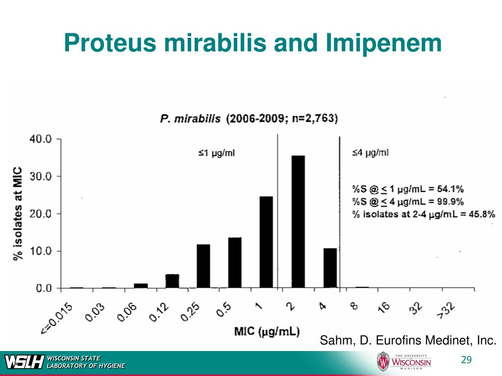 Proteus mirabilis and Imipenem