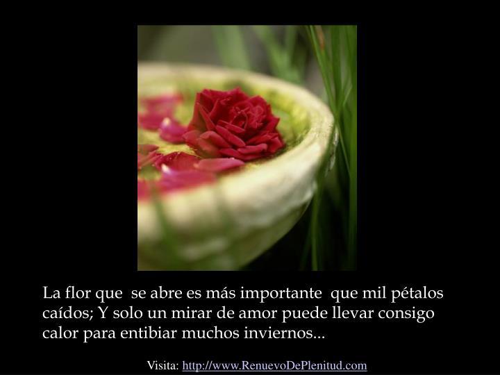 La flor que  se abre es más importante  que mil pétalos caídos; Y solo un mirar de amor puede llevar consigo calor para entibiar muchos inviernos