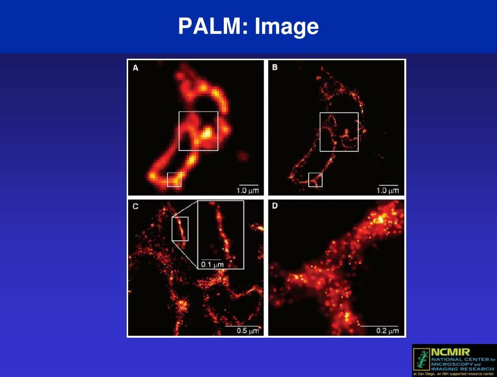 PALM: Image