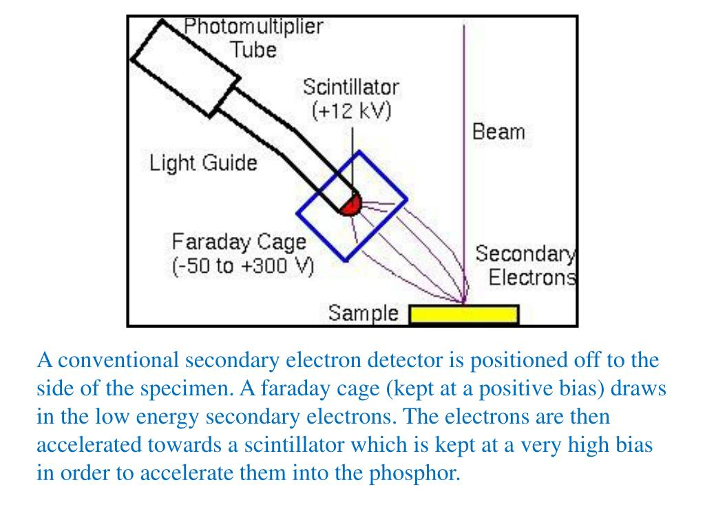 A conventional secondary electron detector is positioned off to the side of the specimen. A faraday cage (kept at a positive bias) draws in the low energy secondary electrons. The electrons are then accelerated towards a scintillator which is kept at a very high bias in order to accelerate them into the phosphor.