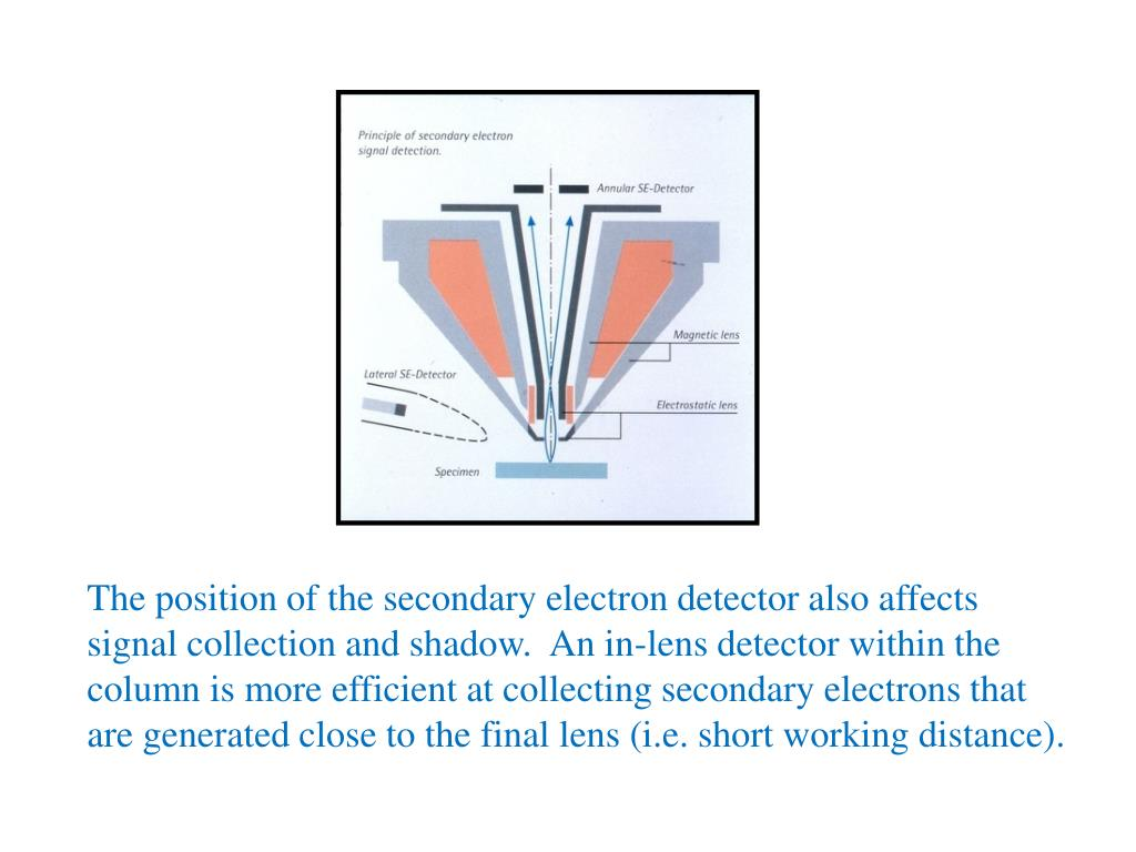 The position of the secondary electron detector also affects signal collection and shadow.  An in-lens detector within the column is more efficient at collecting secondary electrons that are generated close to the final lens (i.e. short working distance).