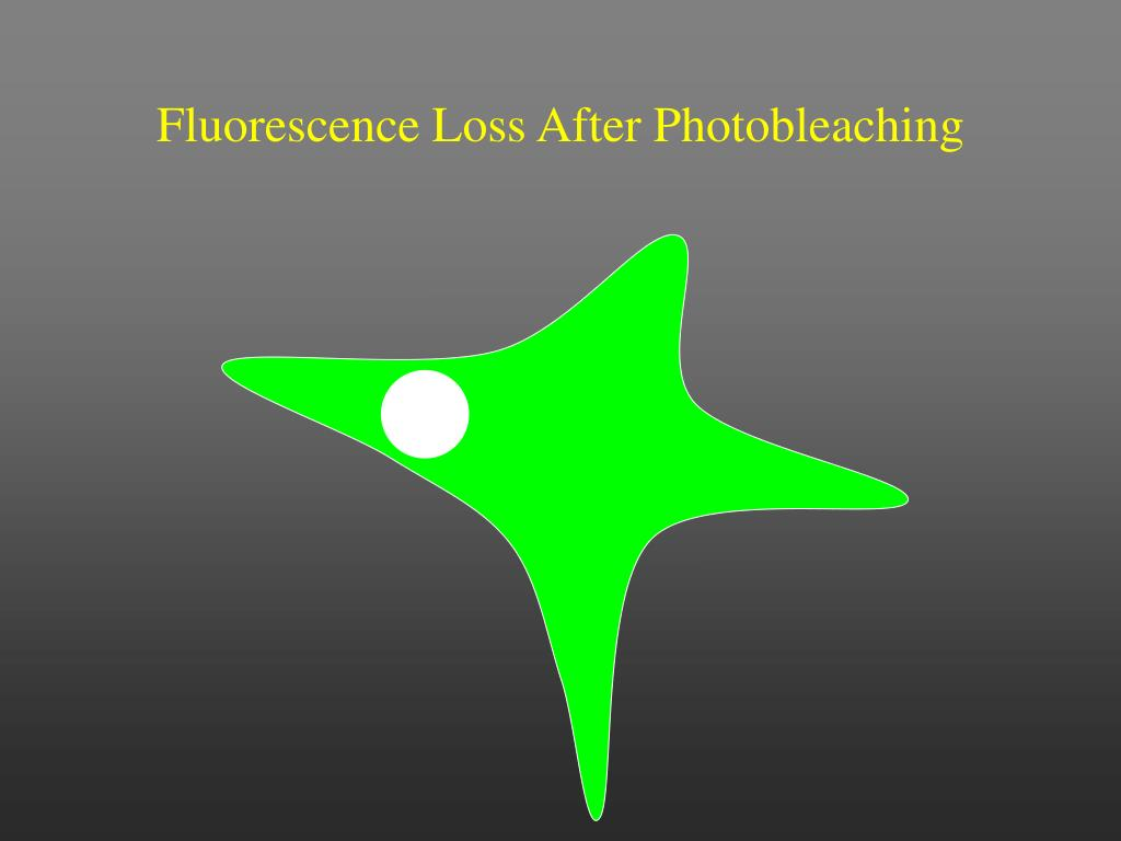 Fluorescence Loss After Photobleaching