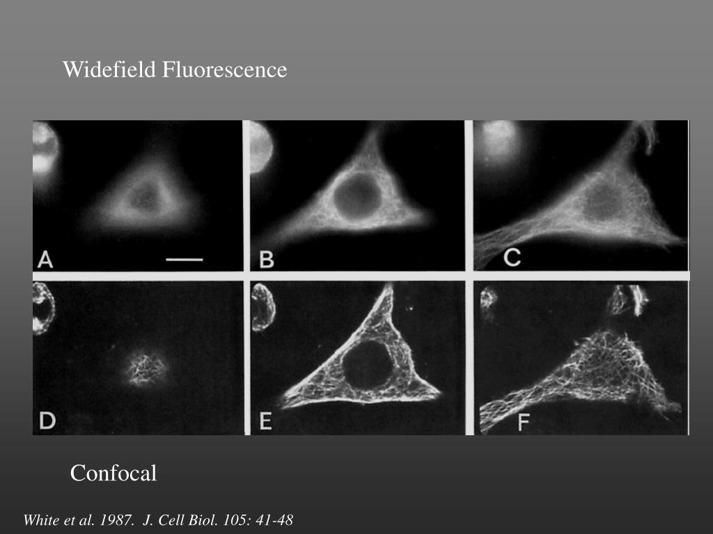 Widefield Fluorescence