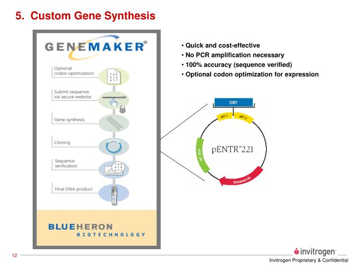 5.  Custom Gene Synthesis