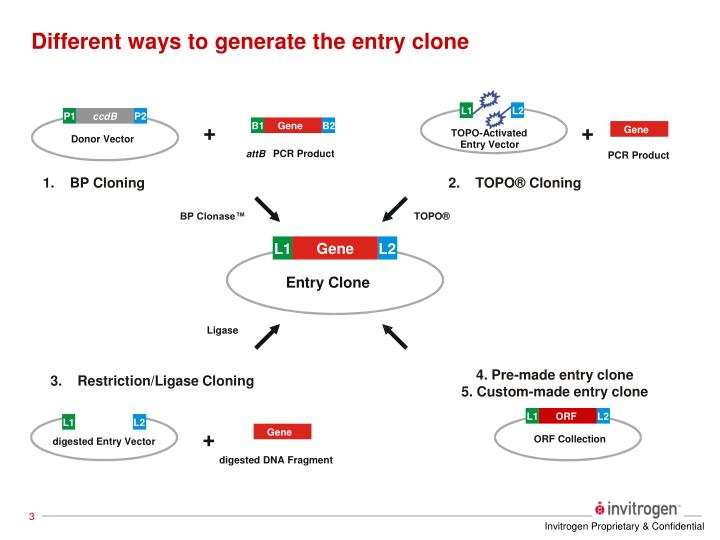 Different ways to generate the entry clone