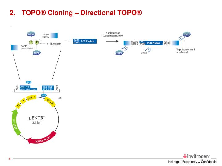 TOPO® Cloning – Directional TOPO®