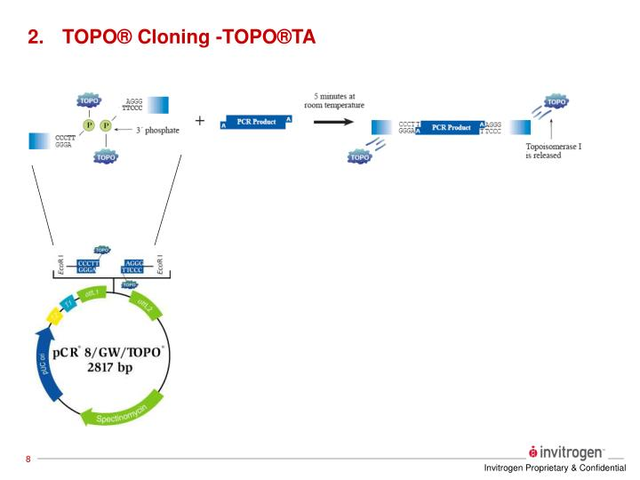 TOPO® Cloning -TOPO®TA