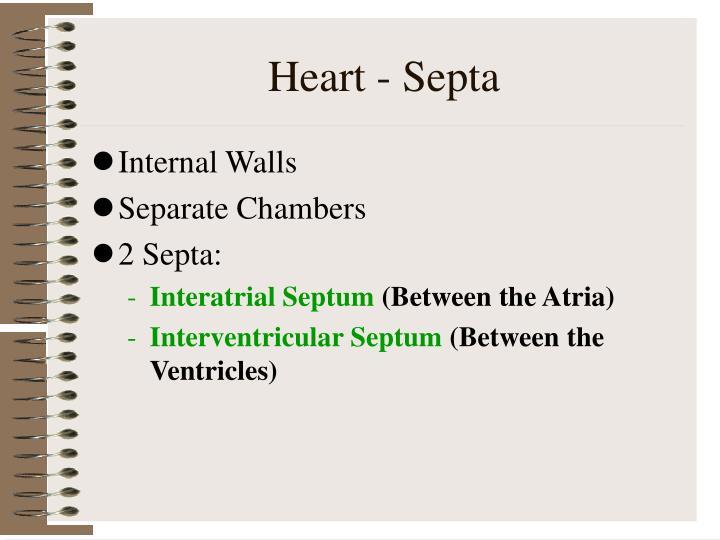 Heart - Septa
