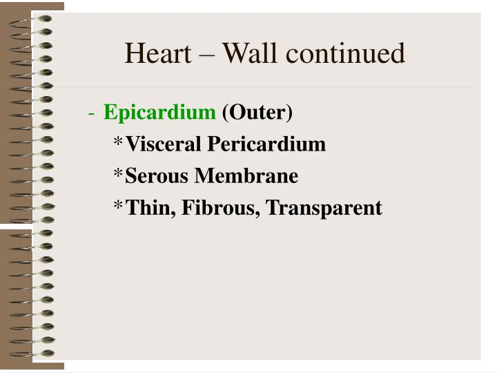 Heart – Wall continued