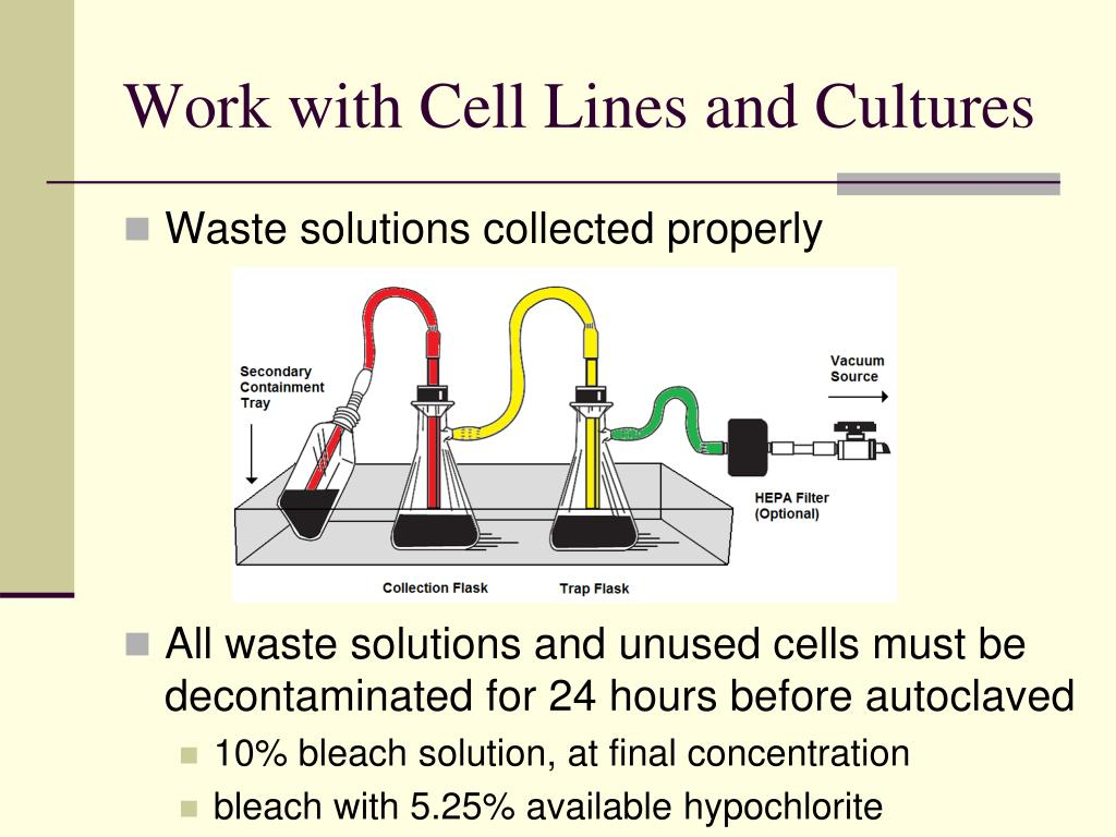 Work with Cell Lines and Cultures