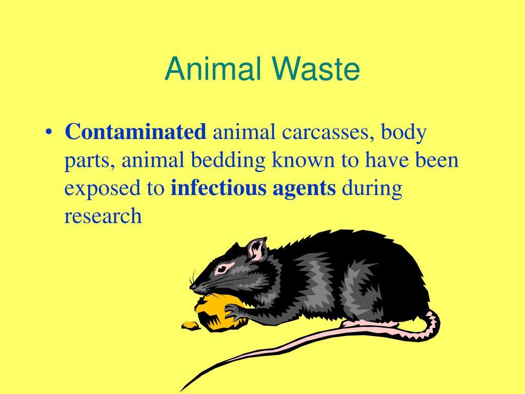 Animal Waste