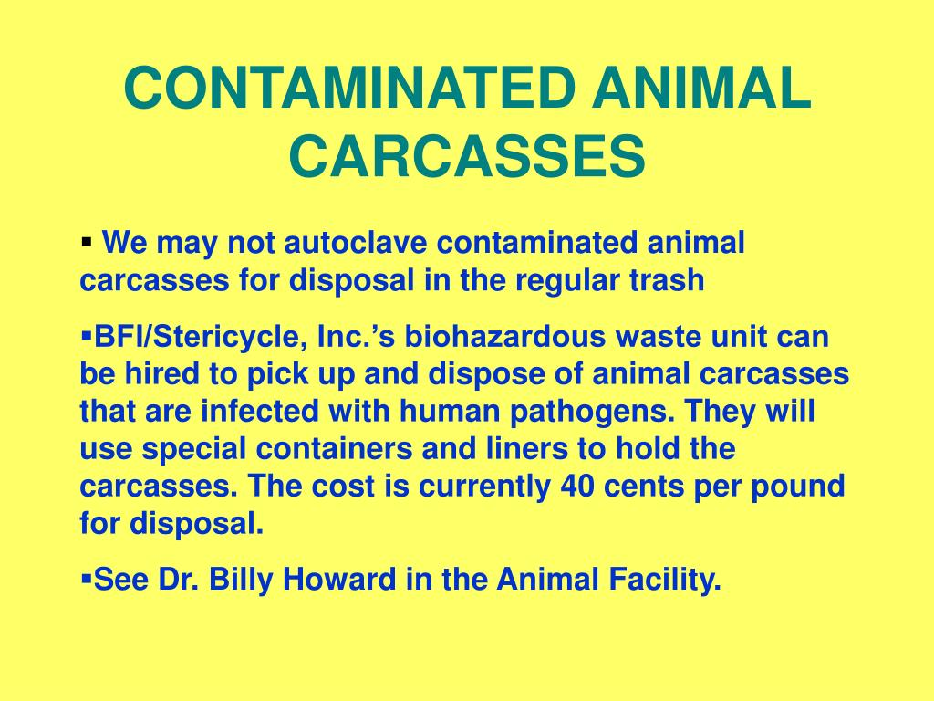 CONTAMINATED ANIMAL CARCASSES
