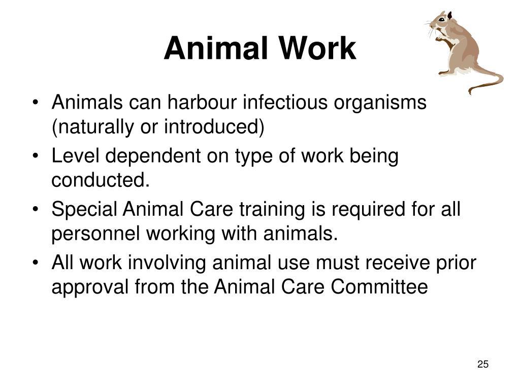 Animal Work