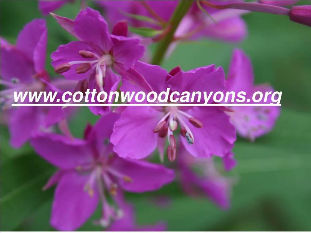 www.cottonwoodcanyons.org