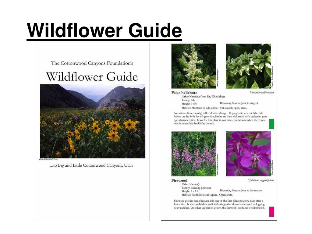 Wildflower Guide