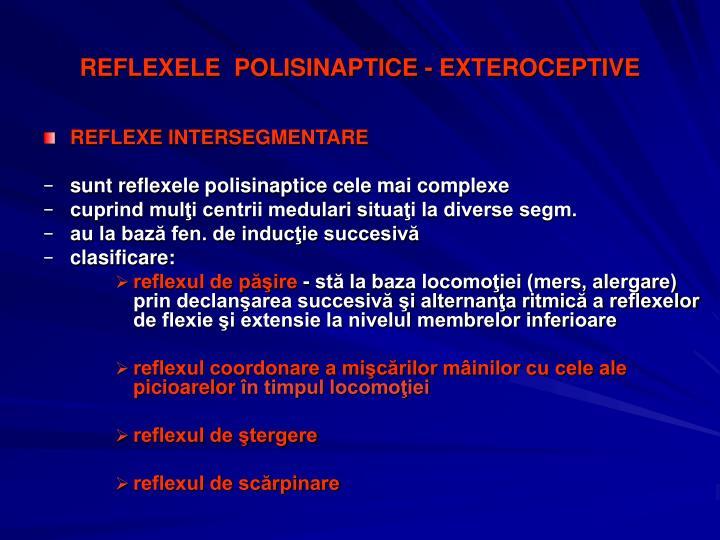 REFLEXELE  POLISINAPTICE - EXTEROCEPTIVE